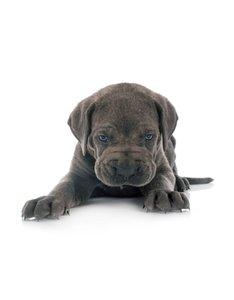 Puppy & Kitten mix compleet 1000 gram