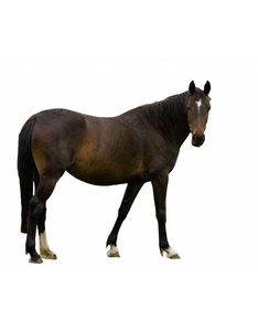 vers vlees kvv voor de hond met paard